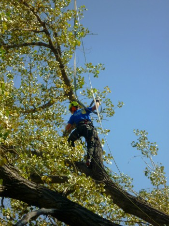 Westminster, CO Tree Services | Tree Trimming & Maintenance