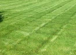 Westminster Lawn Services | Denver Lawn Maintenance